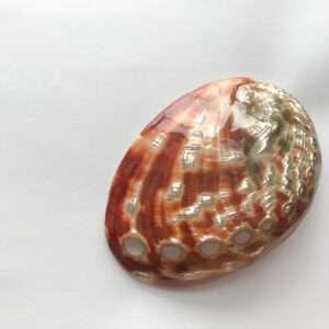 Conchiglia sciamanica di abalone